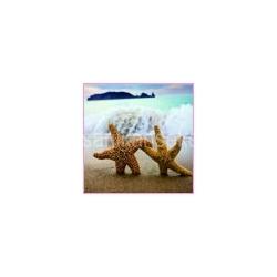Deniz Temalı Nikah Şekeri
